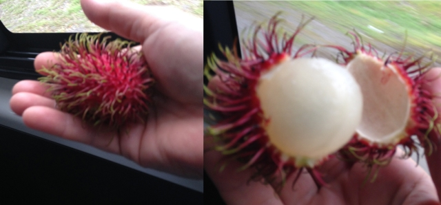 During my trip to Costa Rica, it was fun to taste new fruits. This one is named litchi. I found out later that it's not actually from that country.